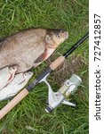 Small photo of Pile of just taken from the water big freshwater common bream known as bronze bream or carp bream (Abramis brama) and white bream or silver fish known as blicca bjoerkna on natural background.