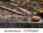 Small photo of snail walk