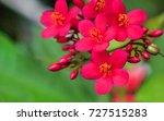 beautiful red needle flowers... | Shutterstock . vector #727515283