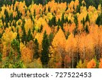 Yellow And Green Trees In...
