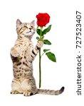 cute kitten scottish straight...   Shutterstock . vector #727523407