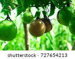 lots of raw and fresh passion... | Shutterstock . vector #727654213