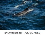 encounter with long finned... | Shutterstock . vector #727807567