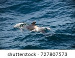encounter with long finned... | Shutterstock . vector #727807573