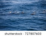 encounter with long finned... | Shutterstock . vector #727807603