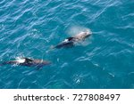 encounter with long finned... | Shutterstock . vector #727808497
