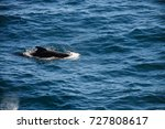 encounter with long finned... | Shutterstock . vector #727808617