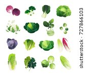 clip art cabbage collection... | Shutterstock .eps vector #727866103