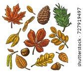 set leaf  acorn  chestnut and...   Shutterstock .eps vector #727919497