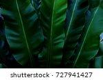 green leaves background. green... | Shutterstock . vector #727941427