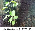 Small photo of Green leaves germinate in the middle of the tree