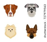 muzzle of different breeds of...   Shutterstock .eps vector #727979563