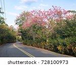 pink ceiba speciosa flowers... | Shutterstock . vector #728100973