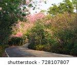 pink ceiba speciosa flowers... | Shutterstock . vector #728107807