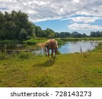 new forest pony on the river... | Shutterstock . vector #728143273
