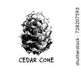 cedar cone  sketch for your... | Shutterstock .eps vector #728207593