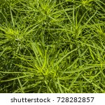 beautiful green plant  shrub | Shutterstock . vector #728282857