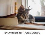 Stock photo kitten books table 728320597