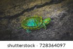 A Baby Red Eared Slider Turtle...