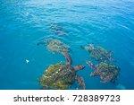 turtles in isla de la plata... | Shutterstock . vector #728389723