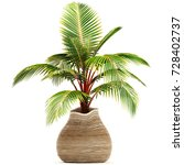 3d illustration dypsis... | Shutterstock . vector #728402737