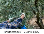 olives harvesting in a field in ... | Shutterstock . vector #728411527