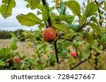 wild apple tree in nature | Shutterstock . vector #728427667
