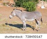 somali wild ass  equus... | Shutterstock . vector #728450167