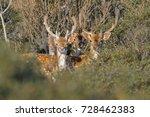 Busted Deers
