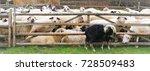 pasture for sheep  sheepfold