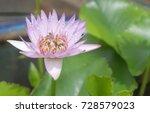 Bees Swarm Purple Lotus. ...