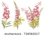 Stock photo illustration in watercolor of willow nerb and lupine floral card with flowers botanical 728582017