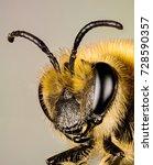 Focus Stacking   Ivy Bee  Bee ...