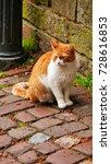 beautiful street cat on the... | Shutterstock . vector #728616853