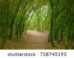 natural trail in the popular...
