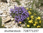 Small photo of Acinos alpinus