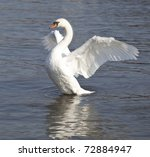 Swan With Wings