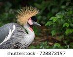 Beautiful Black Crowned Crane...