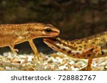 close up of a pair of common or ... | Shutterstock . vector #728882767