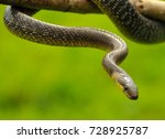 Close Up Photography Of An...