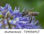 macro closeup on honeybee at... | Shutterstock . vector #729056917