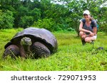 Galapagos Giant Tortoise With...