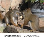 squirrels with a nut | Shutterstock . vector #729207913