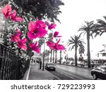 pink flower in black and white... | Shutterstock . vector #729223993