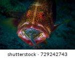 predator in action   big... | Shutterstock . vector #729242743