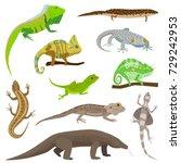 different lizard reptile... | Shutterstock .eps vector #729242953