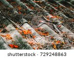 dry branches and flowers fall... | Shutterstock . vector #729248863