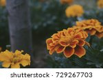 yellow and orange flowers in a... | Shutterstock . vector #729267703