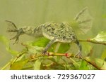 african clawed frog. these... | Shutterstock . vector #729367027