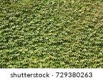leafs micro shot | Shutterstock . vector #729380263